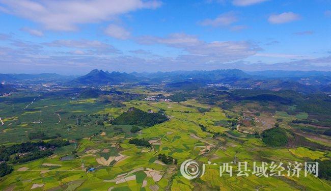 图13:10月19日,在广西柳州市融安县潭头乡新林村拍摄的金色田园。(谭凯兴 摄)