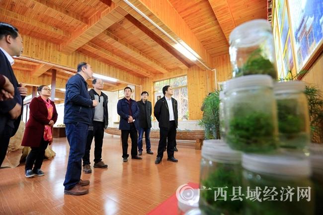 """图10:11月29日,相关专家对广西柳州市融安县""""林海杉源""""香杉生态产业核心示范区进行评审。(谭凯兴 摄)"""