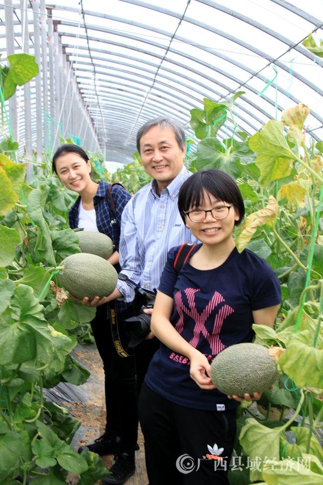 [宁明县]绿田园果蔬农民专业合作社生态体验采摘深受游客青睐