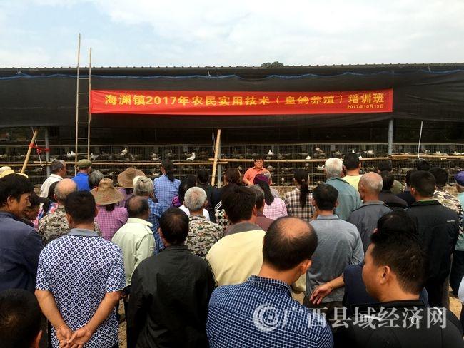 [宁明县]优惠政策扶持贫困户发展皇鸽养殖受欢迎