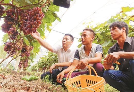 广西地矿局实施精准扶贫工作聚焦