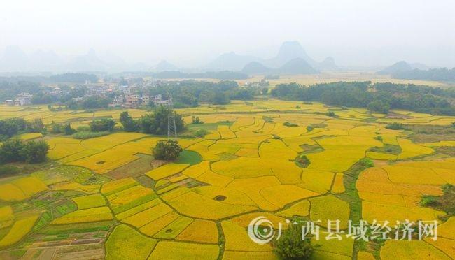 图4:11月7日,在广西柳州市融安县大良镇龙山村拍摄的金色田园。(谭凯兴 摄).JPG