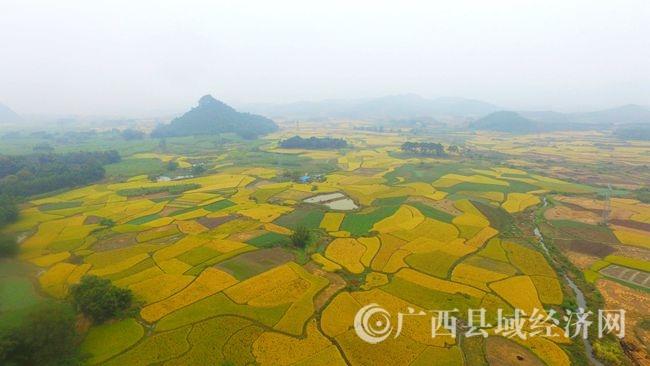 图15:11月7日,在广西柳州市融安县潭头乡新林村拍摄的金色田园。(谭凯兴 摄).JPG