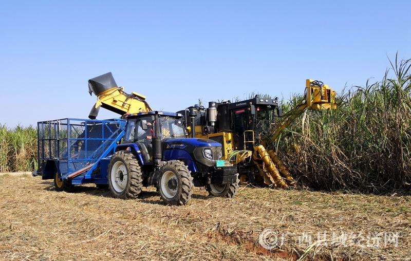 [宁明县]投入大型甘蔗联合收割机助推砍运榨工作