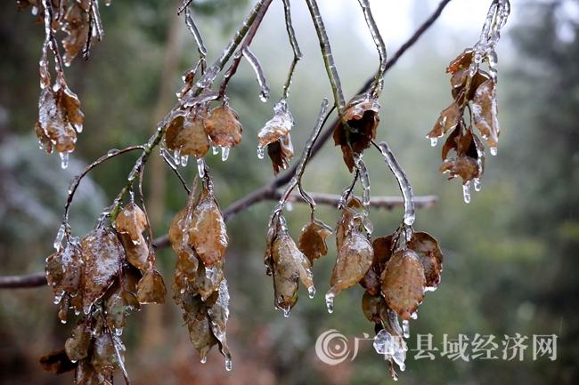 图11:1月27日,在国道357线广西柳州市融安县泗顶镇结冰路段拍摄的冰冻。(谭凯兴 摄)