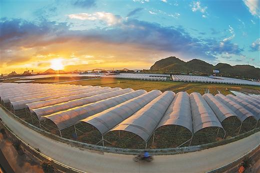 [鹿寨县]产业兴旺 提质升级