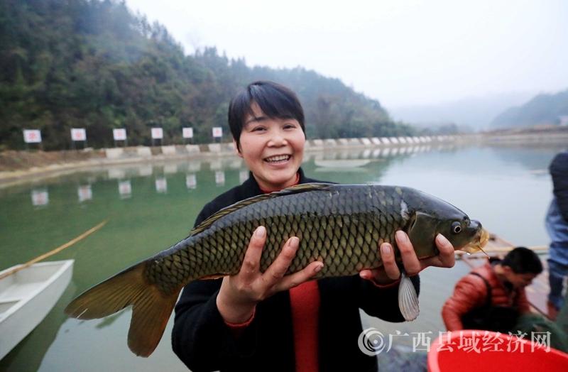 [融安县]清水河鱼助脱贫