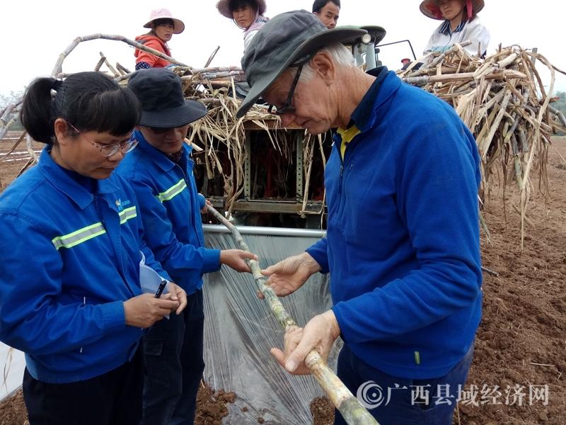 [宁明县]澳大利亚专家到宁明指导甘蔗现代农场建设