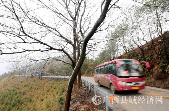 图3:1月27日,一辆客车经过国道357线广西柳州市融安县浮石镇结冰路段。(谭凯兴 摄)
