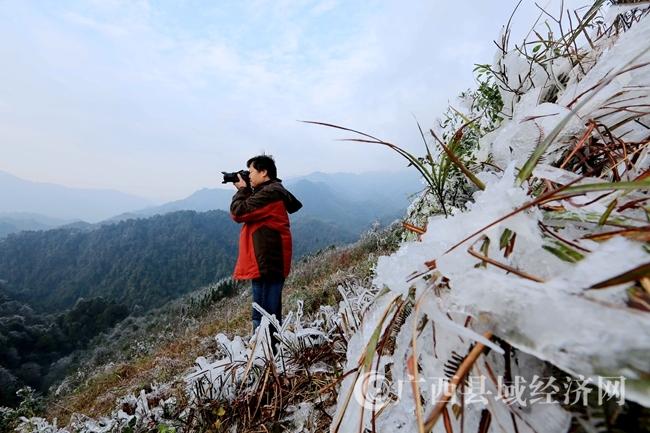 图5:1月8日,在广西柳州市融安县板榄镇东岭村大岩屯,一名党员干部在拍摄冰冻情况。(谭凯兴 摄)