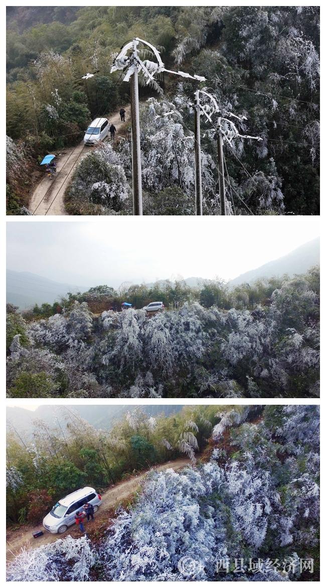 图6:1月8日,在广西柳州市融安县板榄镇东岭村大岩屯,当地党员干部在查看冰冻情况。(谭凯兴 摄)