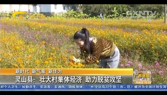 [灵山县]壮大村集体经济 助力脱贫攻坚