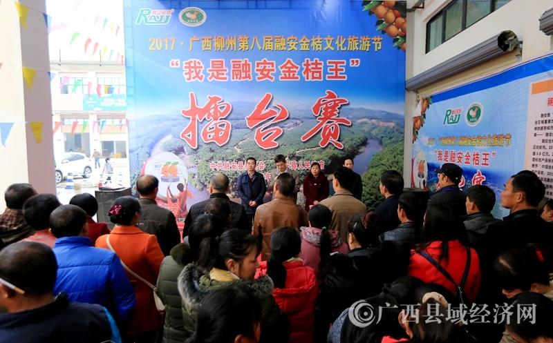 图11:12月28日,在广西柳州市融安县拍摄的在金桔擂台赛现场。(谭凯兴 摄)