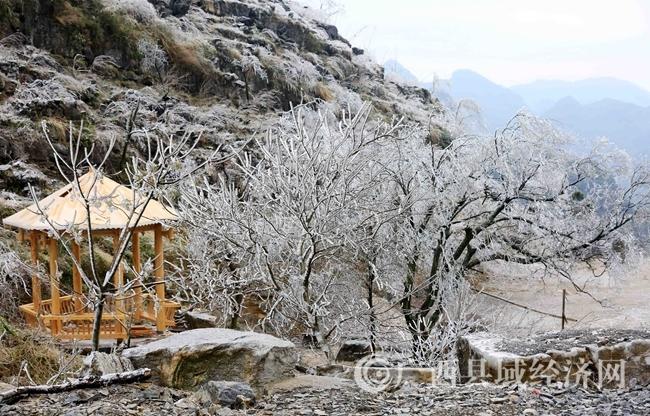 融安县东起乡崖脚村铜板屯:冰挂美景