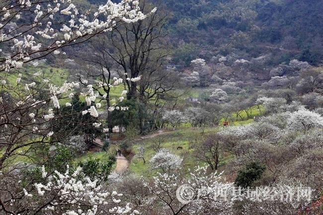 图11:2月25日,在广西柳州市融安县东起乡崖脚村铜板屯拍摄的美丽乡村。(谭凯兴 摄)