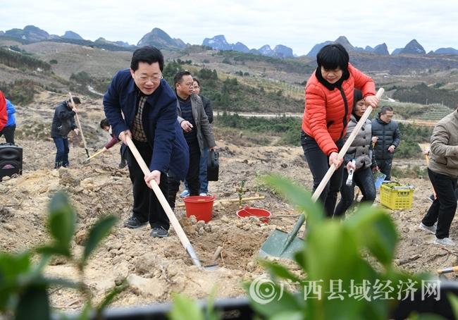 """[罗城县]实行""""以奖代补""""激励政策 计划种植油茶面积3.2万亩"""