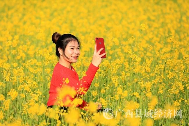 图1:1月31日 ,一名游客在广西柳州市融安县沙子乡红妙村油菜花田中用手机自拍。(谭凯兴 摄).JPG