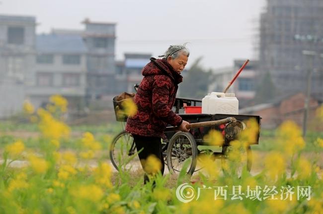 图1:2月4日,在广西柳州市融安县长安镇大巷村,一名农民在田间翻地,准备种植春季作物。(谭凯兴 摄).JPG