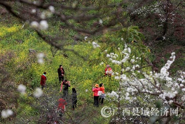 图2:2月25日,游客在广西柳州市融安县东起乡崖脚村铜板屯游玩。(谭凯兴 摄)