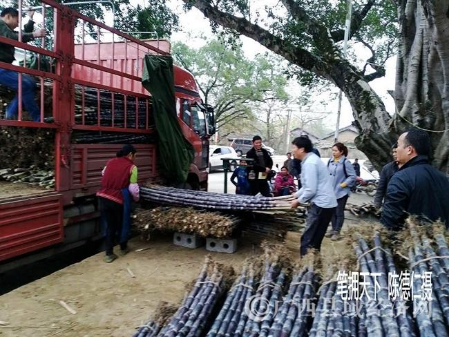 1月21日,三里镇第一单甜心果蔗通过电商远销黑龙江