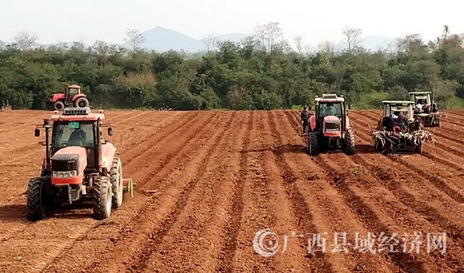 """[宁明县]抓住农时加快甘蔗""""双高""""基地建设步伐"""