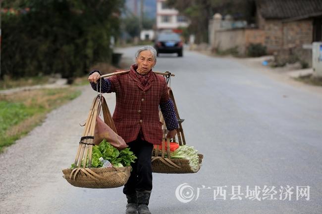 图6:2月4日,在广西柳州市融安县长安镇大巷村,一名农民挑刚收获的蔬菜回家。(谭凯兴 摄).JPG