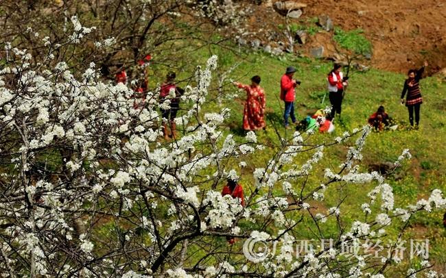图8:2月25日,游客在广西柳州市融安县东起乡崖脚村铜板屯游玩。(谭凯兴 摄)