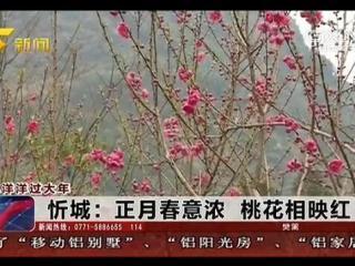 忻城:正月春意浓 桃花相映红