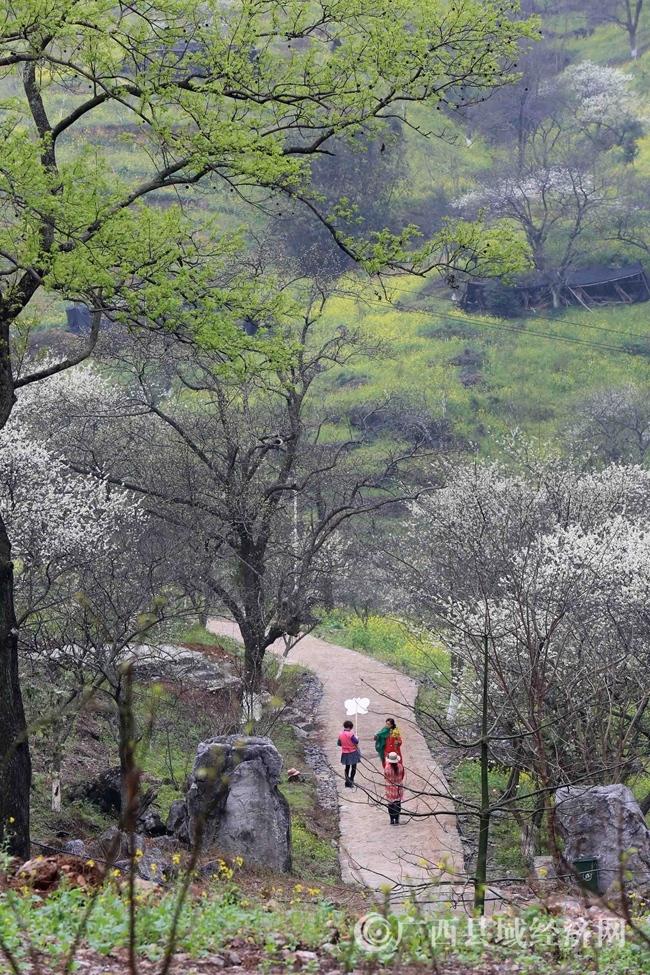 图8:3月2日,游客在广西柳州市融安县东起乡崖脚村铜板屯踏青赏花。(谭凯兴 摄)