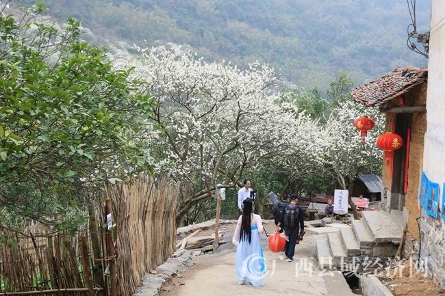 图2:3月2日,游客在广西柳州市融安县东起乡崖脚村铜板屯踏青赏花。(谭凯兴 摄)