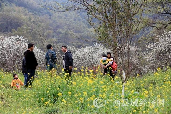 图9:3月2日,游客在广西柳州市融安县东起乡崖脚村铜板屯踏青赏花。(谭凯兴 摄)