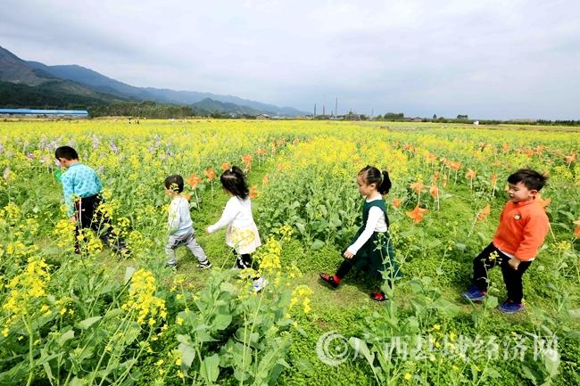 图8:3月4日,市民在广西柳州市融安县长安镇大巷村油菜花海中游玩。(谭凯兴 摄)