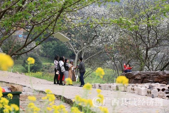图4:3月2日,游客在广西柳州市融安县东起乡崖脚村铜板屯踏青赏花。(谭凯兴 摄)