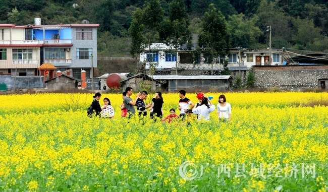 图1:3月4日,市民在广西柳州市融安县长安镇大巷村油菜花海中游玩。(谭凯兴 摄)