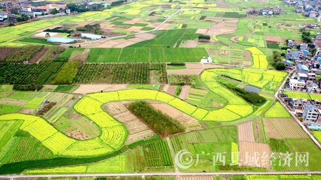 [融安县]春季生态经济唱主角