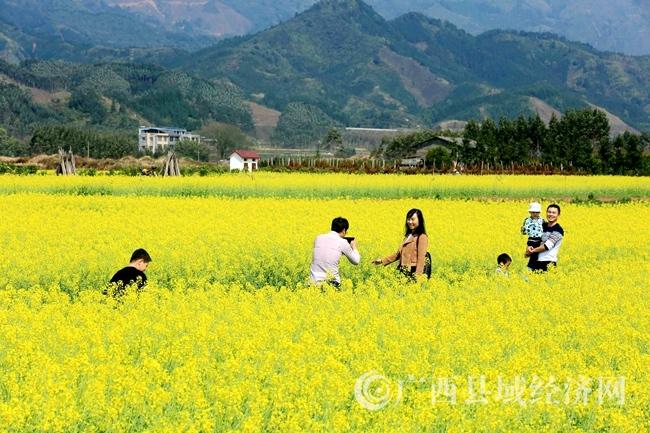 图2:3月4日,市民在广西柳州市融安县长安镇大巷村油菜花海中游玩。(谭凯兴 摄)