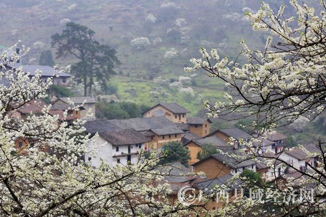 图10:3月2日,游客在广西柳州市融安县东起乡崖脚村铜板屯踏青赏花。(谭凯兴 摄)