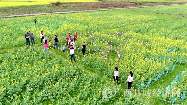 图3:3月4日,市民在广西柳州市融安县长安镇大巷村油菜花海中游玩。(谭凯兴 摄)