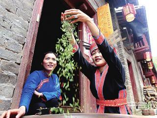 金秀镇六段村:明前茶 飘香大瑶山