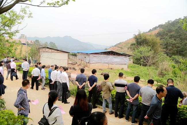 蒙山县:发展黑土猪养殖