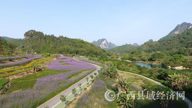 图为风景优美的花海一景。 (1)
