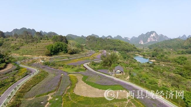 图为风景优美的花海一景。 (2)