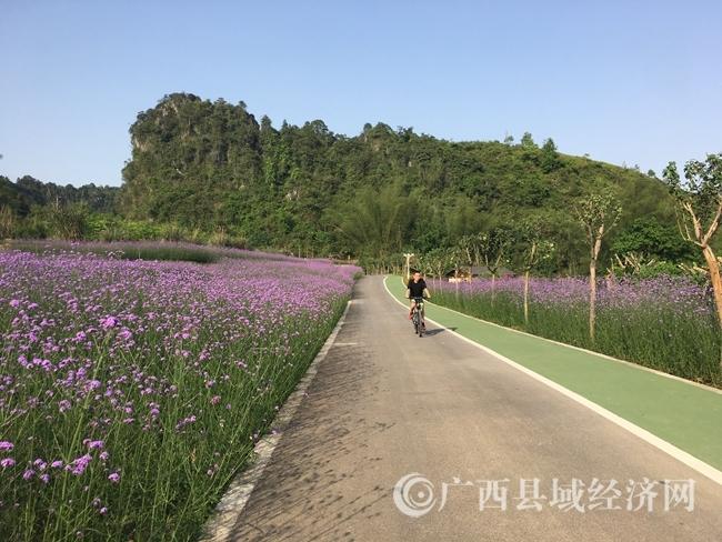 4月8日,游客在大阳幽谷花海中骑行。