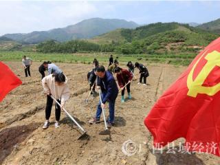 融安县:发展集体经济助力脱贫攻坚