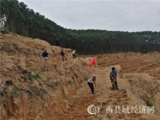 平果县:四塘镇发展村集体经济有高招――党建+公司+基地