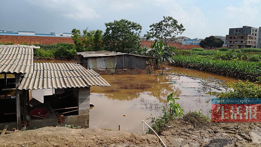 48头猪被淹死!一场暴雨为何导致村子受淹这么严重