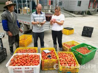 南丹县:果蔬产业示范助农增收