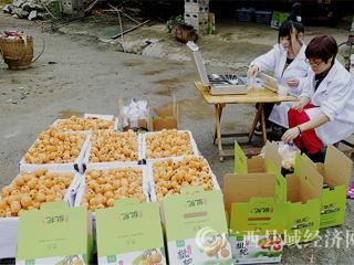 南丹县:枇杷成熟正当时 检测护航保质量