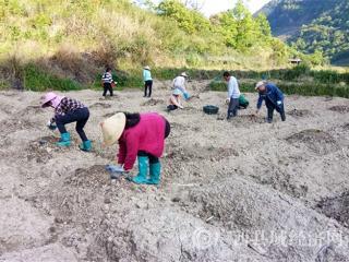 南丹县:大厂镇积极发展种植罗汉果