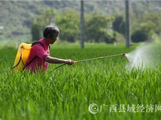 罗城县:小满至 农事忙